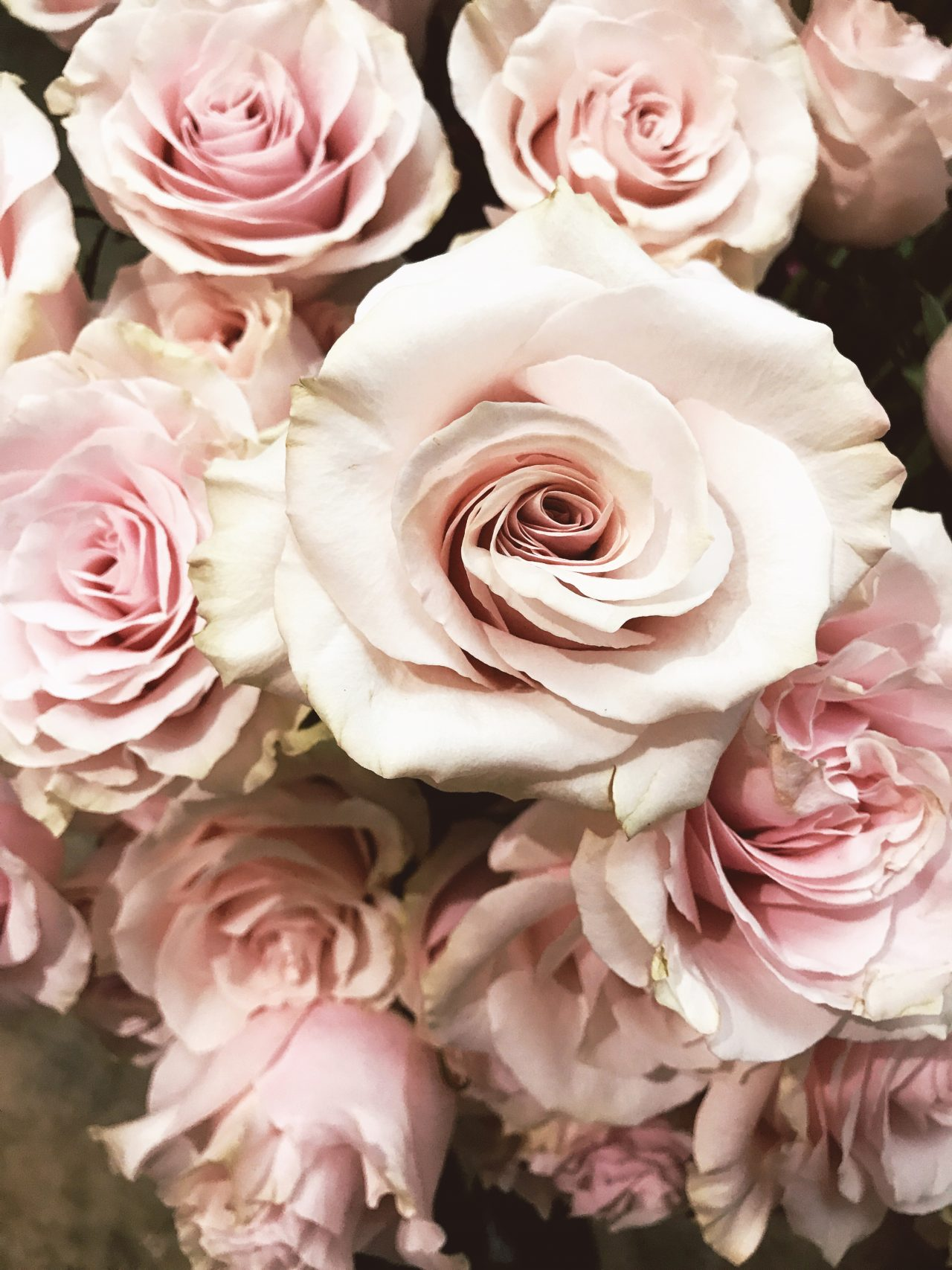 Friday's Five, Pink Mondial Roses