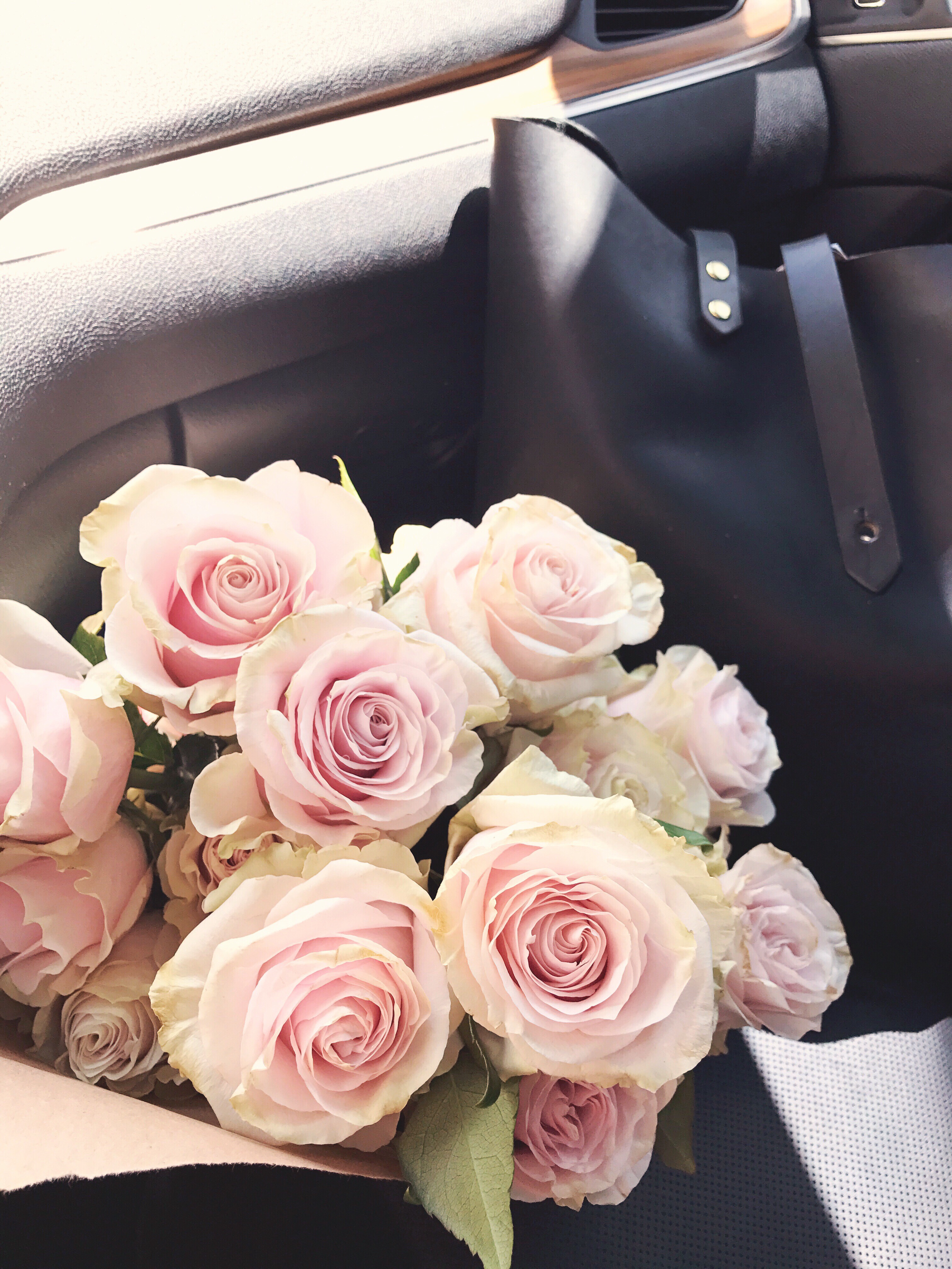 pink mondial roses