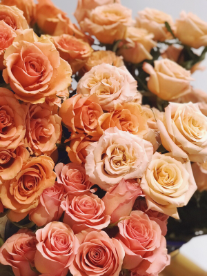 Ombre Coral Roses